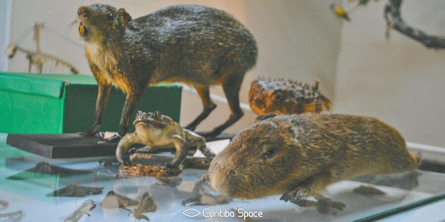 Bosque Capão da Imbuia - Museu de História Natural Capão da Imbuia - Curitiba Space