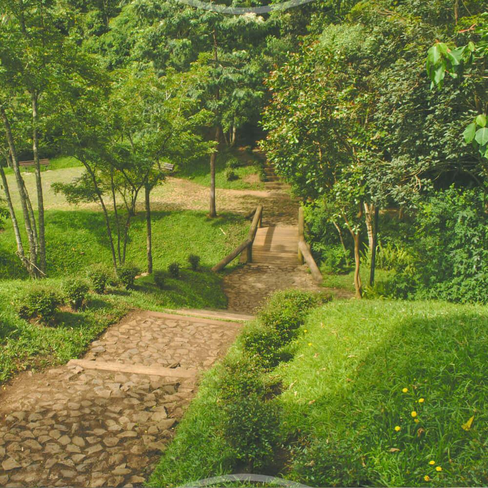 12 De Setembro: Inauguração Do Bosque Gutierrez