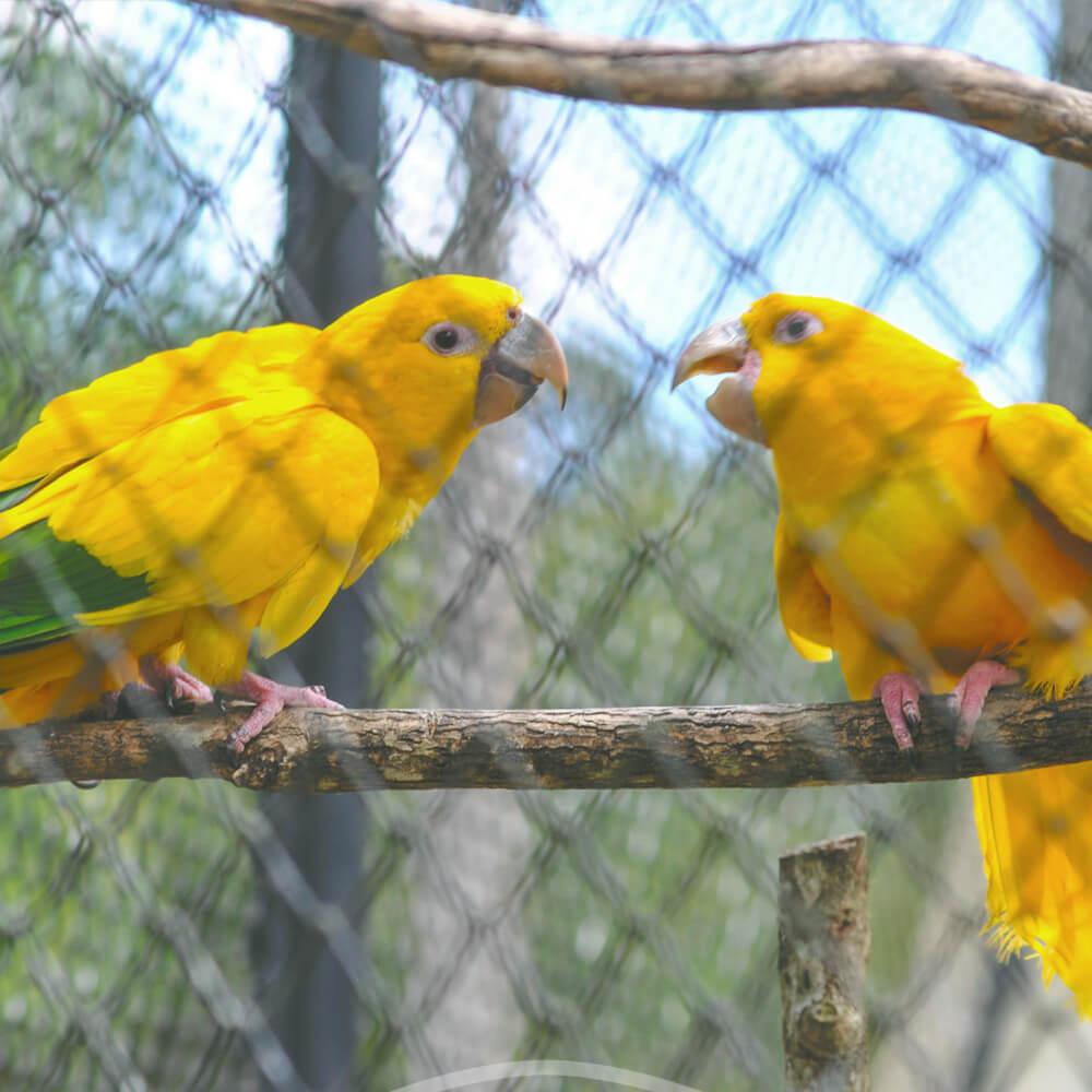 Zoológico De Curitiba