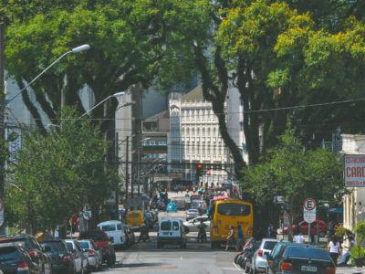 As Quatro Tipuanas Da Praça Santos Dumont