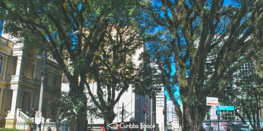 As quatro tipuanas da Praça Santos Dumont - Curitiba Space